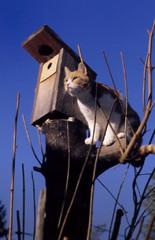 linnunponton vieressa