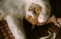 nukkuu tassu kasvoilla