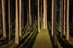 Metsän portti