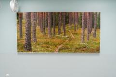 5.krs_harjupolku_120 x 240 cm