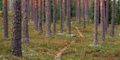 harjupolku_120 x 240 cm