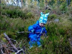 Toivo ja syksyinen metsä