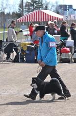 Pörri Lahti pentunäyttely 2012
