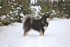 Prinsessa talvi 2014/1