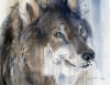 """Susimaisia ajatuksia / Wolf-like thoughts"" 60x80cm 2017"