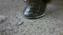 Sama kavio natural balance kengityksen jälkeen.