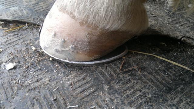 kinnerpatti kenkä