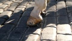 valjakkohevosen mukulakiville suunniteltu kenkä.