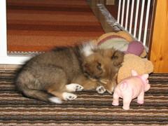15.12.10 Nyt tuli väsy uudessa kodissa!