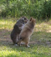 28.6.14 Koiria vai oravia