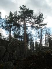 Luontokuva, kevään kajastusta