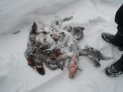 Pielaveden Jylhässä 1.3.2011