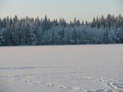 Pielaveden Jylhässä 28.12.2014
