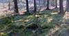 petsor hautausmaa kappalang