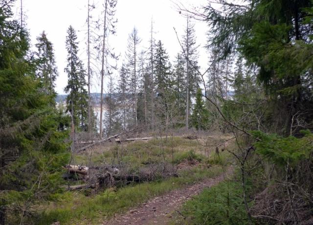 kuusisto kappelimaki luontopolkua pitkin