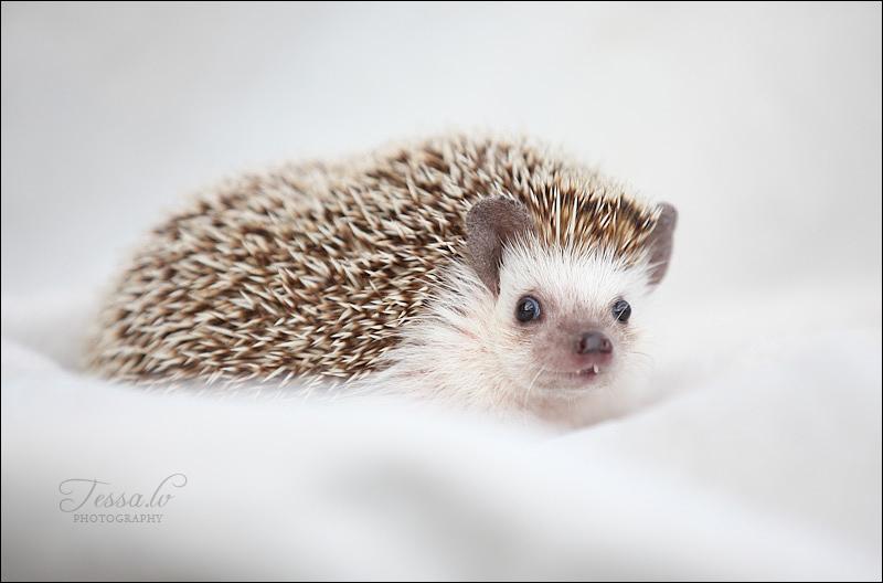 Muut lemmikit /Other pets | Treselle's