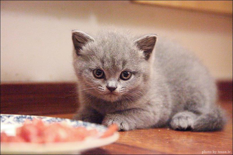 Kissa Madot