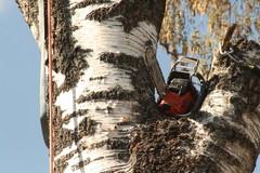 Isossa puussa on sahankin huilattava välillä:)