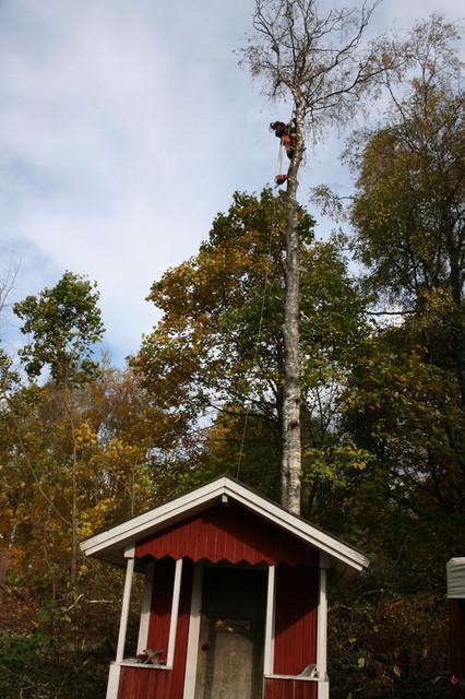 Aina se korkea puu ei ole helpossa paikassa