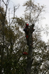 Kaatamalla puu osissa minimoidaan kaikki vahingot