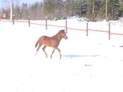 Ensimmäinen talvi