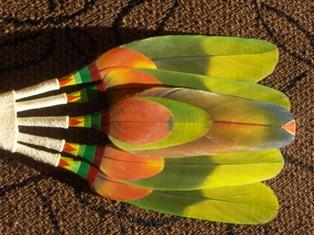 ceremonial fan - intiaaniviuhka 2 (featherwork)