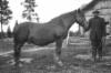 Mies ja hevonen