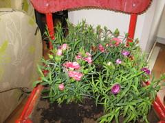 kukkatuoli