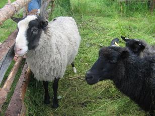 myytävät loma asunnot pohjois karjala somero