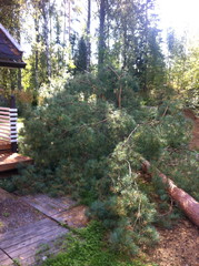 Aina puunkaato ei ole helppo