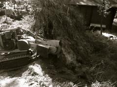 Myrskytuhojen korjaus, kaatuneet puut
