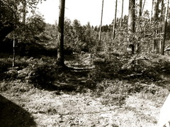 Myrskyn kaatamia puita