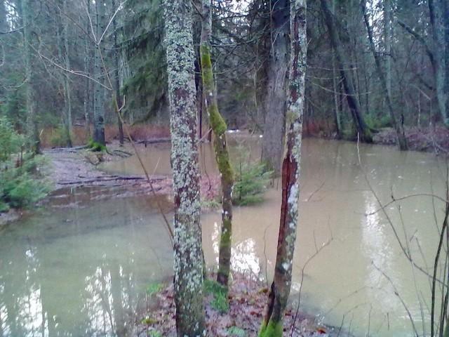 tulvat 11 008
