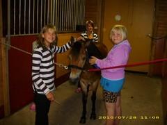 Hevosten hoitoa alkeisleirillä Tiia, Heini, Roosa ja Pätkä -poni