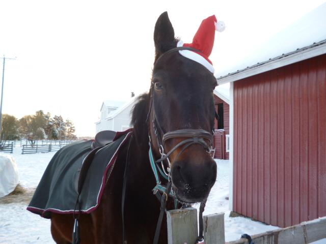 Arska jouluna 2012