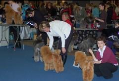 Kehässä tytöt koirapoikien kanssa
