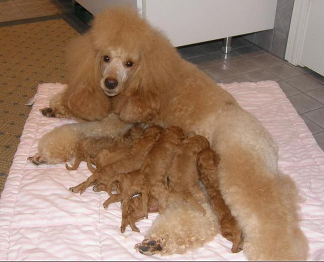 Netta ja vauvat