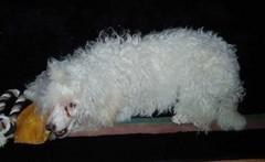 Venny 26.1.2008