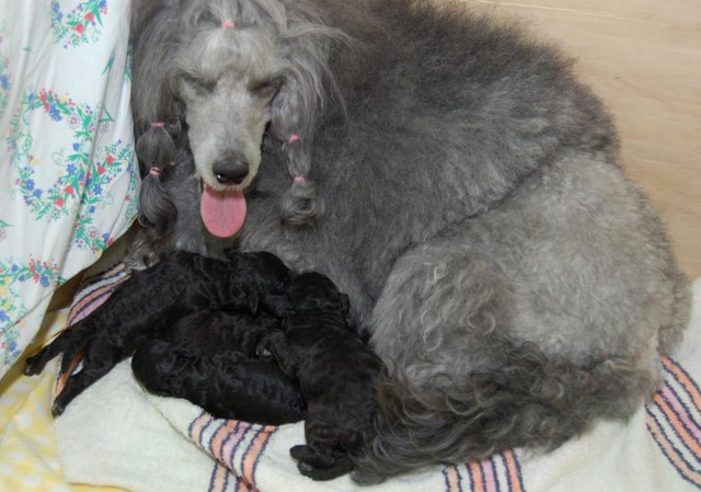 Sara ja vauvat