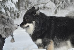 Osku ja Ville