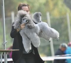 Iksu lentää Porvoossa 2013
