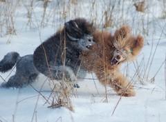 Veeti ja Ville talvella 2008