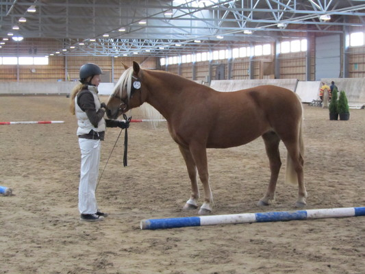 Hevosen Tiineys