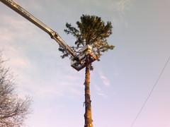 Vaativat puunkaatotyöt