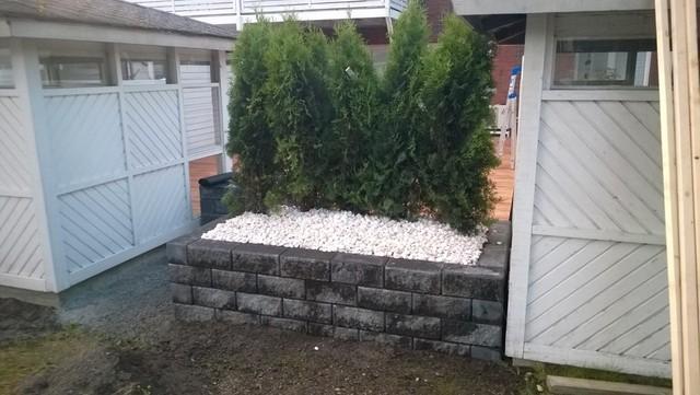 Istutuksia betonikivimuurin sisällä