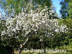 kesakuu_2