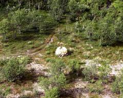 RM 342 A Inarista. Ilmakuva: VVV/RVL:n OH-HVH