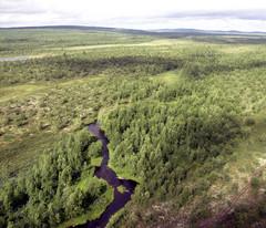 Rajajoen (Rajaoja) latvajuoksua Suomen ja Norjan rajalla. Kuva: VVV/RVL:n OH-HVH