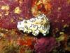 nudibranch1