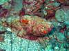 stonefish ehka